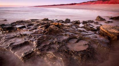 Australische wetenschappers ontdekken grootste dinosaurusafdruk ooit