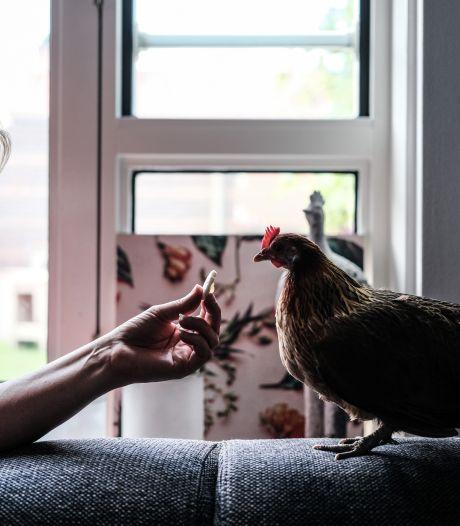 Kakelende kip Nugget eet graag mee met baasje Bianca: 'Het liefst pikt ze het eten van je vork'