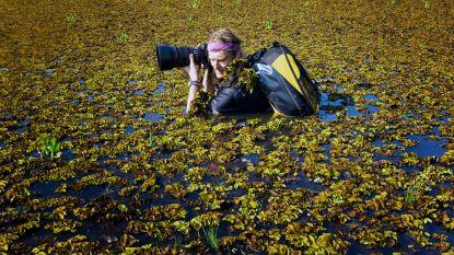 Natuurfotograaf Guido Sterkendries komt naar Bertem