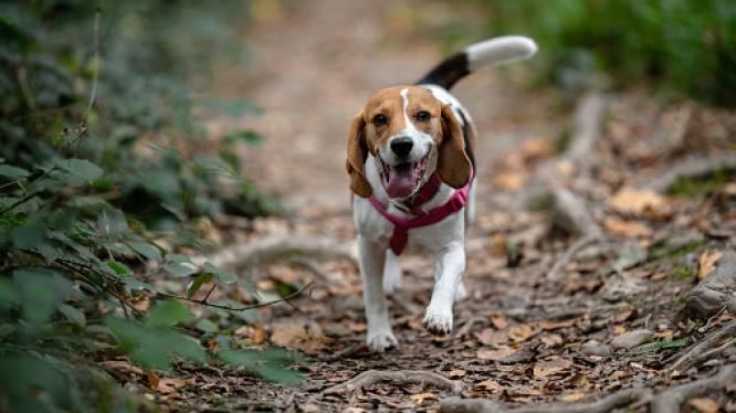 HET DEBAT. Zijn boetes en strengere controles op loslopende honden waar dat verboden is een goed idee?