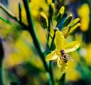 Neonicotinoïden zijn funest voor de gezondheid van bijen, zegt Tennekes. ,,Ze raken gedesoriënteerd door de schade aan het zenuwstelsel en kunnen vervolgens de korf niet meer vinden. Het volk raakt ondervoed en is vatbaarder voor ziekten.''