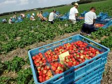 Arbeidsmigranten Maasdriel na zomer in beeld
