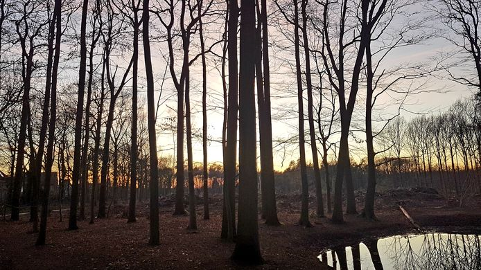 Het Ulvenhoutse Bos.