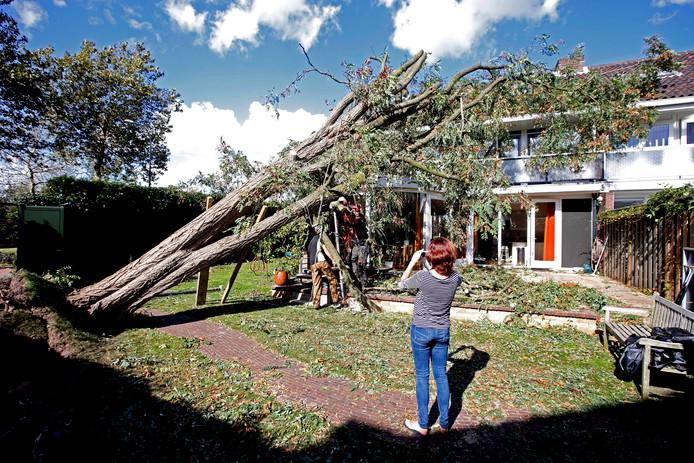 In Dordrecht viel vorig jaar een 28 meter hoge boom op een woonhuis. Wonder boven wonder raakte niemand gewond.