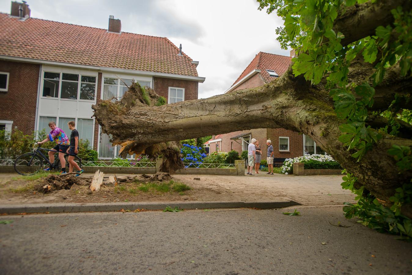 De omgevallen boom verspert de hele straat. Onder de boom stond een auto die vrijwel zeker total loss is.