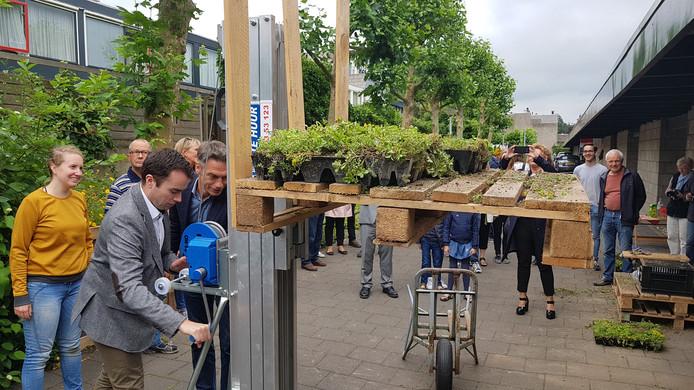 Wethouder Mike van der Geld takelt een aantal (sedum)plantjes omhoog.