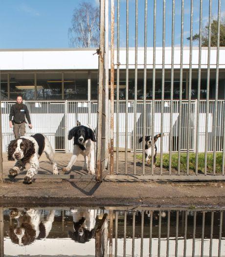 Koest! Blaffende honden in asiel Harderwijk moeten  vanaf 1 december stiller zijn