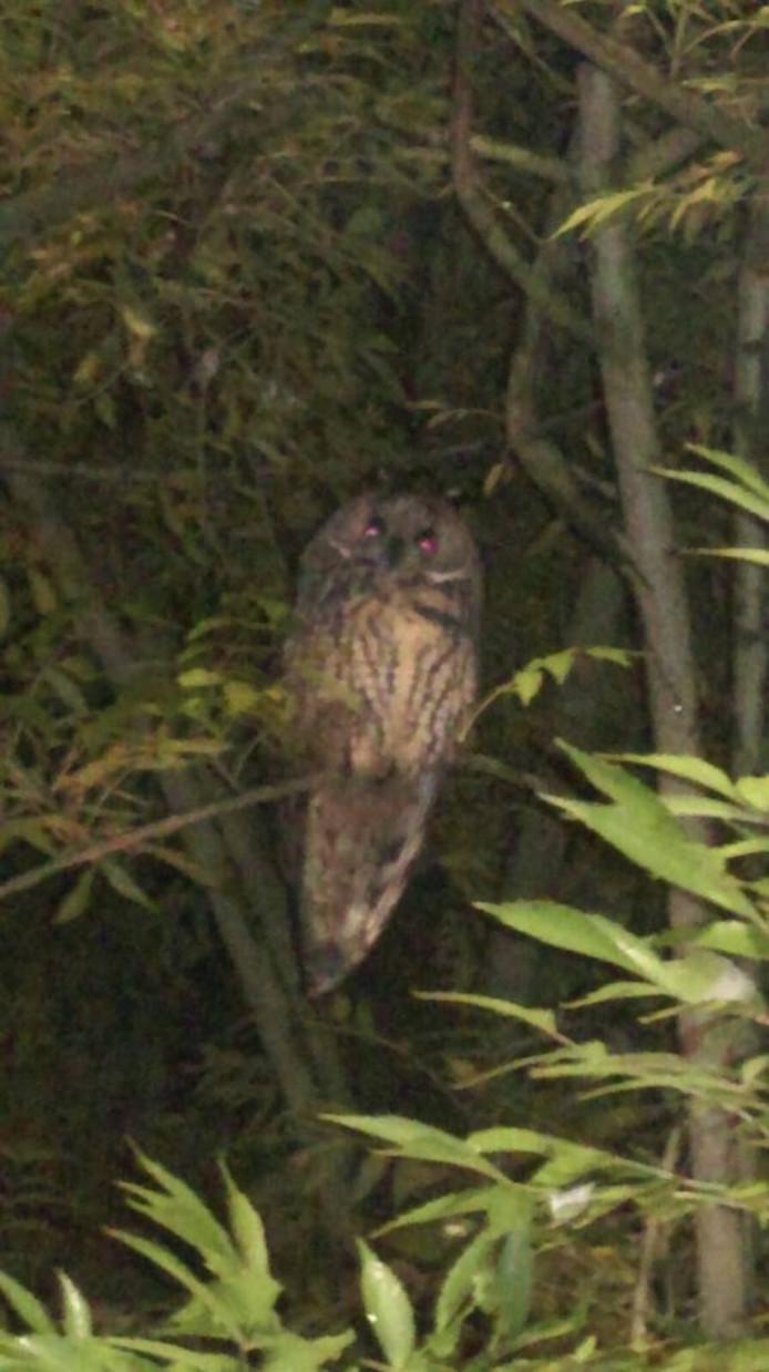 Een van de Deestse uilen.