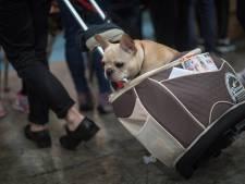 Puppy moet van stewardess in bagagerek en overlijdt