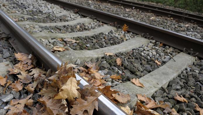 Bladeren op het spoor.