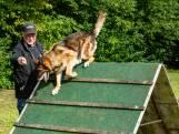 Zo traint Ronnie zijn honden net even anders