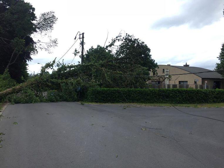 Stormschade : Boom waait op elektriciteitskabels in de Kasteeldreef in Wetteren.