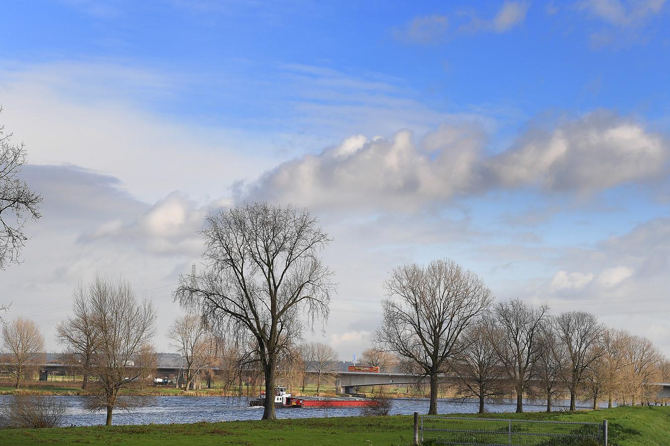 Bakenbomen langs de Maas.