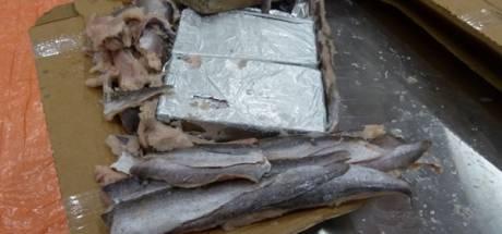 Grote cocaïnevangst tussen bevroren vis