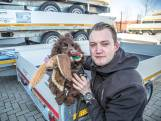 Schattig hondje Bailey jaagt op apensmokkelaar