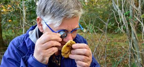 Op paddenstoelenjacht: een zwammetje met de zachte citroengeur van geraniums