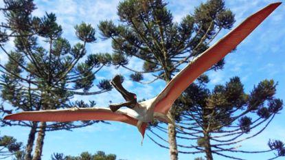 Nieuwe soort vliegende dinosaurus ontdekt die op draak lijkt