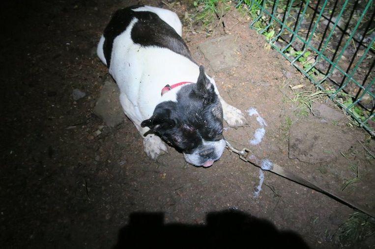 Het hondje was uitgeput, onderkoeld en doodsbang.