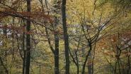 Klavertjevierwandeling tussen de bomen in Cotthem