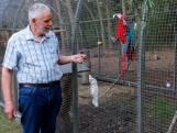 Clubhart: D'n Toonder uit Bergeijk is 'gebeten' door papegaaien