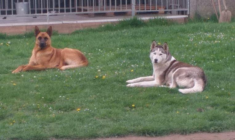 De honden van Shanie.