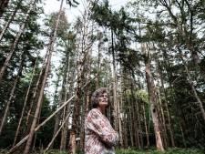 Kevers vreten de bomen in  de Plantage bij het kasteel Huis Bergh op