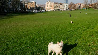 """Vorst verbiedt toegang tot grasvelden in park: """"Veel burgers hebben de richtlijnen nog niet begrepen"""""""