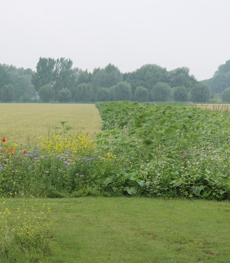 Bloemrijke akkers kleuren boerenlandschap in Driel