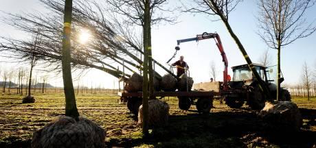 In Zundert is het 'eigen bomen eerst!'