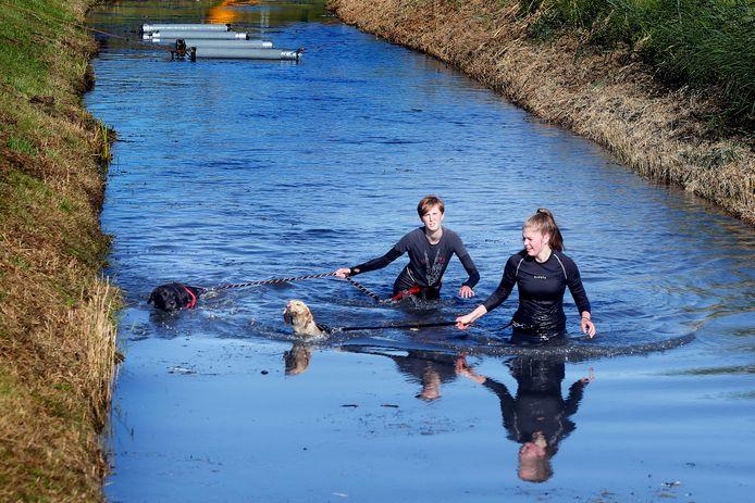 Zwemmen, klimmen, klauteren. Honderden honden en hun baasjes deden afgelopen weekend mee aan een speciale dog survival.