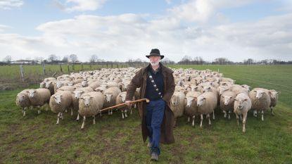 """Goed nieuws voor schapenboeren na wolvenaanvallen: """"80% van omheining wordt terugbetaald"""""""