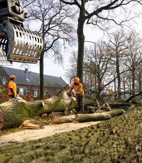 Zicht langs N395 verandert razendsnel door bomenkap
