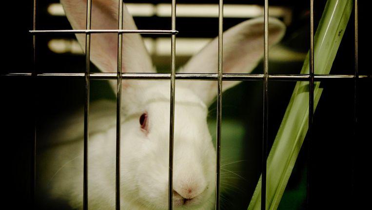 Een konijn in een hok van het Centraal Dierenlaboratorium in Nijmegen Beeld anp