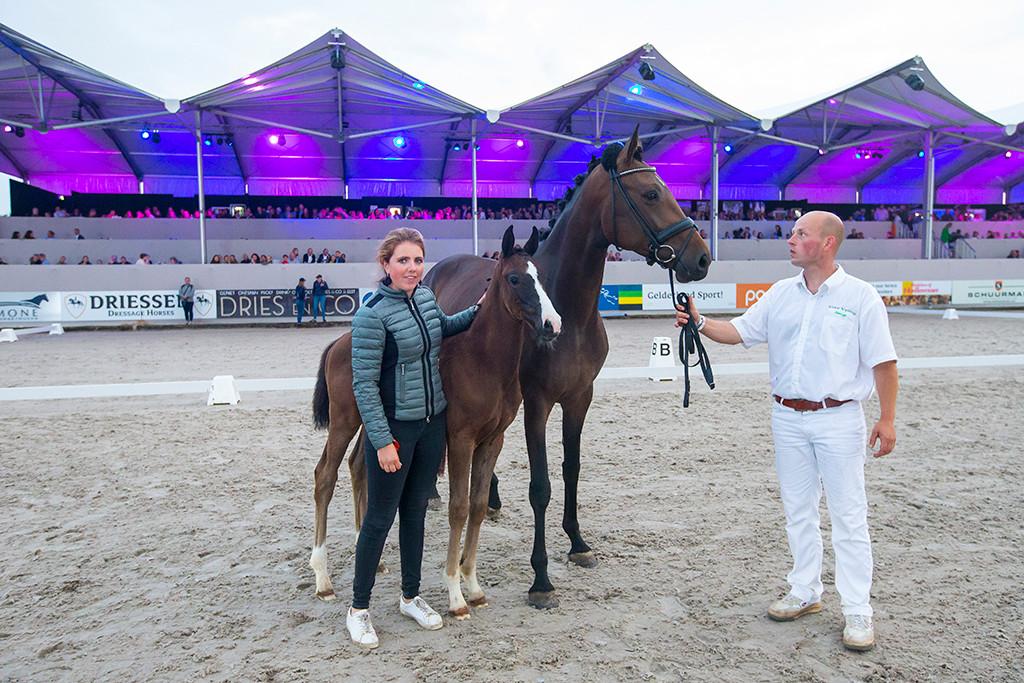 Ovation, met vader Imposantos, ging bij de veulenveiling van Outdoor Gelderland voor 35.000 euro weg.