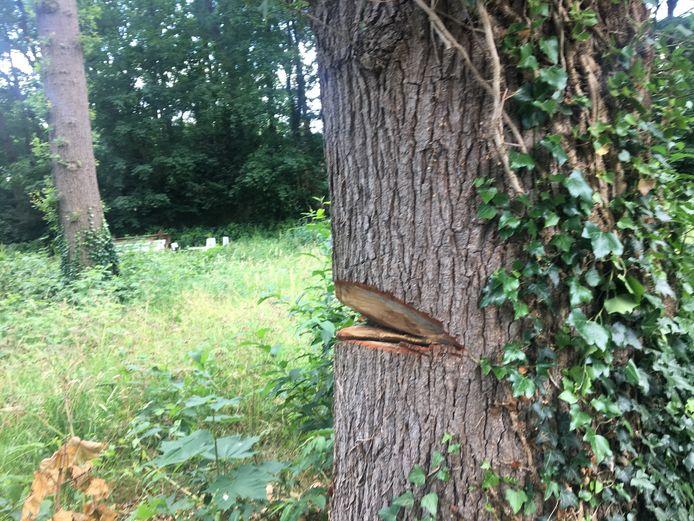De beschadigde boom op het perceel aan de Dr. Keyzerlaan in Goirle. Inmiddels is die overigens gestut.