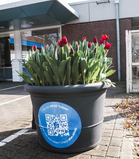 Softwaregigant AFAS deelt massaal tulpen uit om 'wat kleur te brengen in donkere dagen'