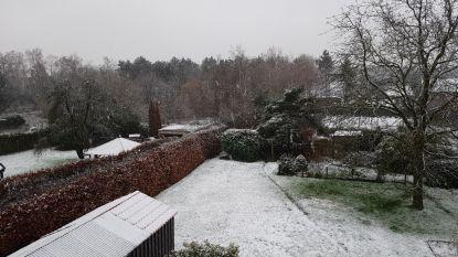 Eerste sneeuw dwarrelt neer in de Kempen