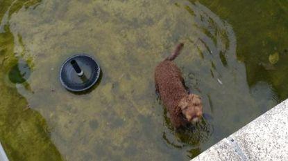 Hondje Baptist na 25 uur teruggevonden in (gelukkig lege) vijver