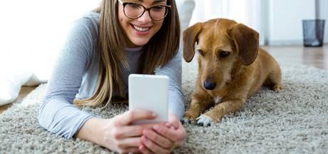 Vertaalapp hond-mens kwestie van tijd