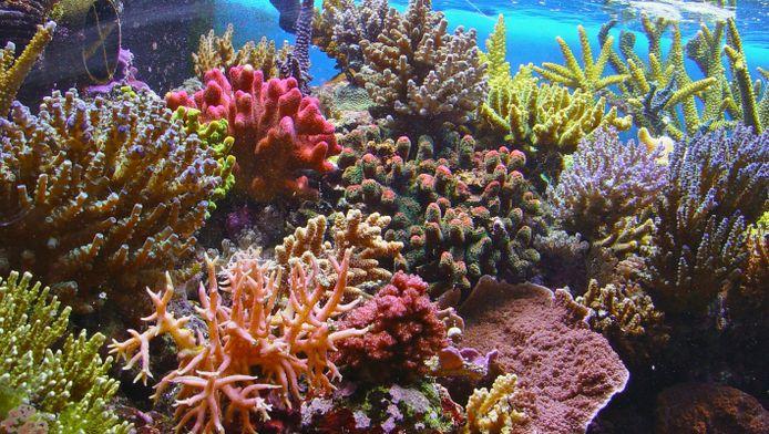 Het Great Barrier Reef is ecologisch en economisch van vitaal belang - het draagt 822 miljoen dollar per jaar aan de Australische economie bij.