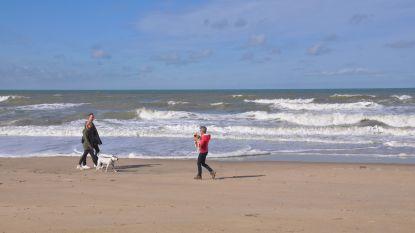 """Middelkerke pakt uit met bewaakt hondenstrand: """"Én ze mogen er zwemmen"""""""