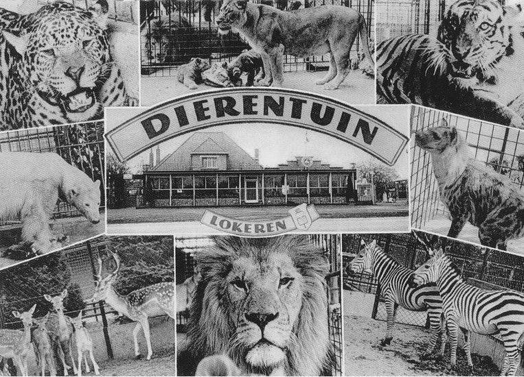 Een postkaart van de dierentuin die zich ooit bevond aan de Gentse Steenweg.