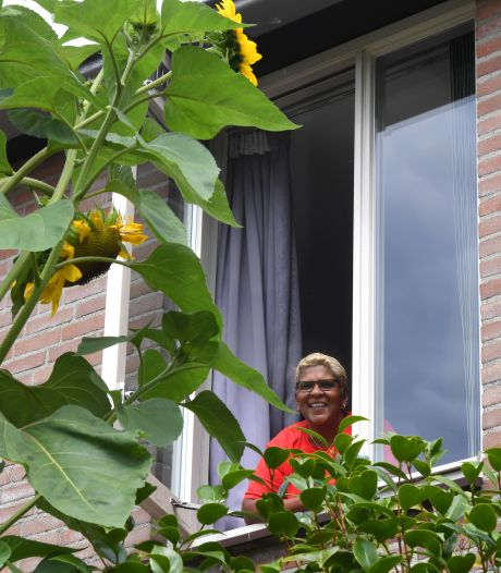 Sonja dacht bij het planten: ik wil een zonnebloem die me wakker zoent