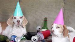VIRAL3 Feel Good Friday: wat doen honden eigenlijk als je niet thuis bent?