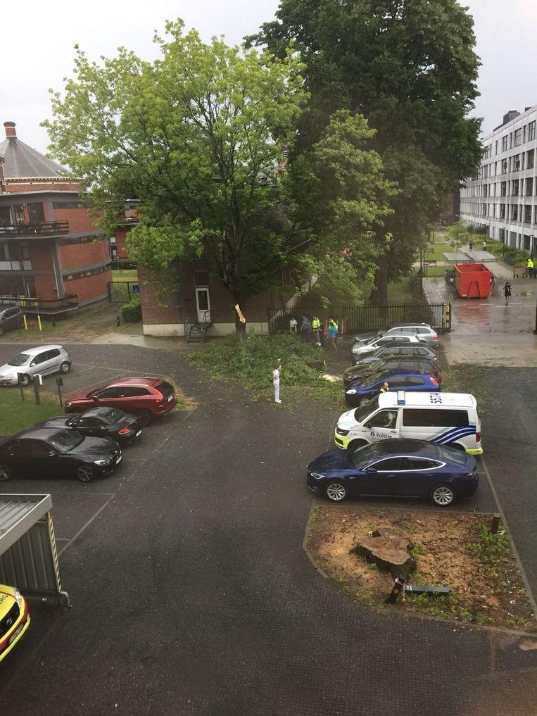 De omgewaaide bomen beschadigde verschillende wagens op de personeelsparking van ziekenhuis Stuivenberg.