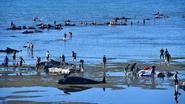 Nieuw-Zeelandse walvissen raken opnieuw in zee