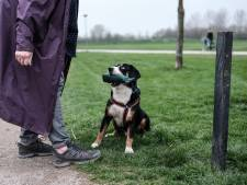 Maatregelen na overlast door bijtende honden in Duiven en Westervoort