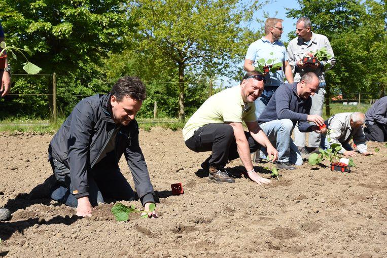 Een zestal CISCO-medewerkers gingen de bewoners van De Lovie helpen op de hoeve.
