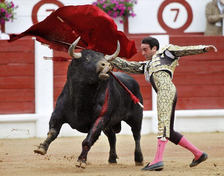 Stierenvechter Enrique Ponce tijdens het 'Feria de Gijon' in het noorden van Spanje, afgelopen weekend.