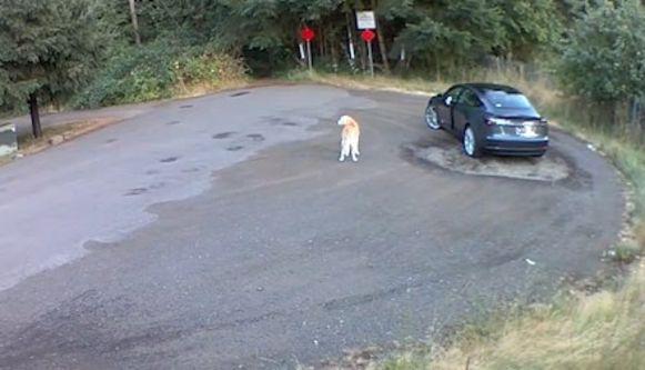 Hond achtergelaten